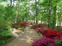 Path on Mount Hamilton