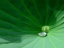 Captured drop
