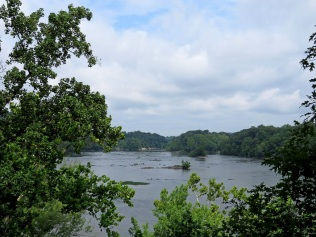 Potomac River, looking upstream. Turkey and Vaso Islands are at center and center right, respectively.