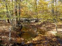 Woods along Potomac Heritage Trail