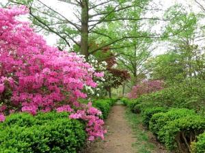 A path on Mount Hamilton