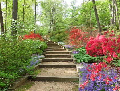 Steps into the Azalea Garden on Mount Hamilton