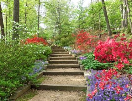 Steps into the Azalea Garden on Mount Hamilton