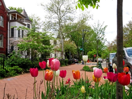 Tulips on North Carolina Avenue