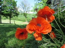 Unidentified orange flower