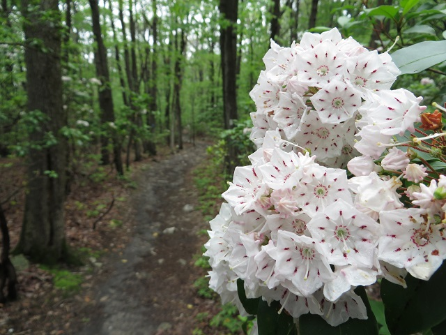 Flowers on the trail