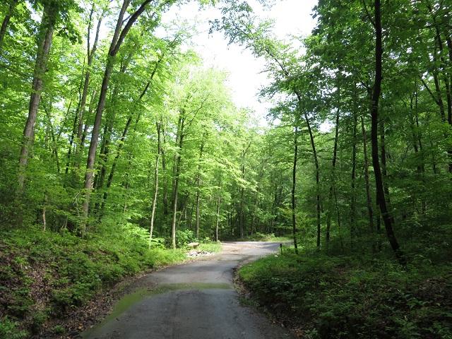 Mount Ephraim Road