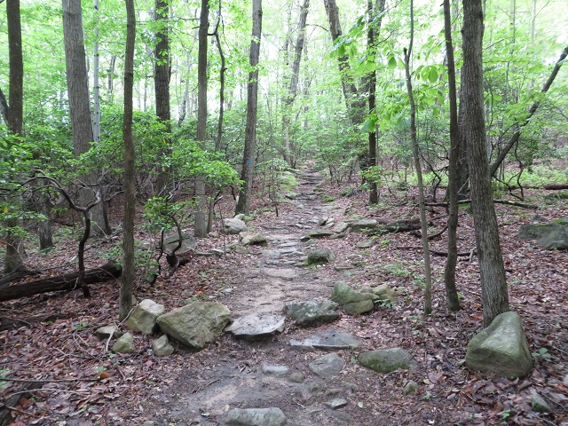Trail section