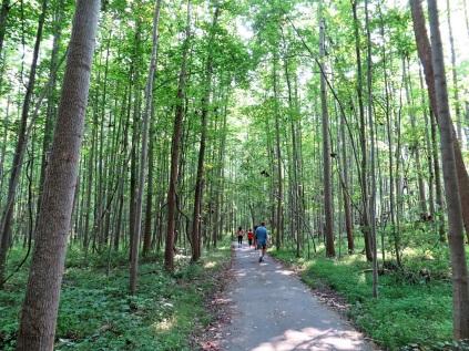 The South Run Trail