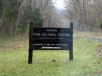 Virginia Fish Cultural Station