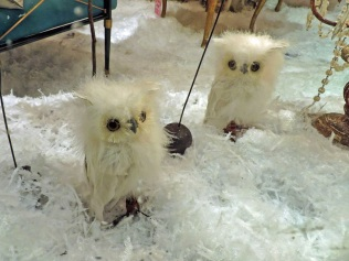 Owls in a shop window