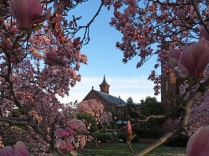 Magnolias in the Haupt Garden