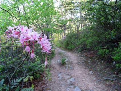 Kennedy Peak Trail